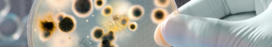main-image-abstract-bacteria