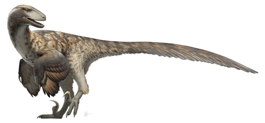 'Jurassic Park' got it wrong: UWO research indicates raptors don't hunt in packs