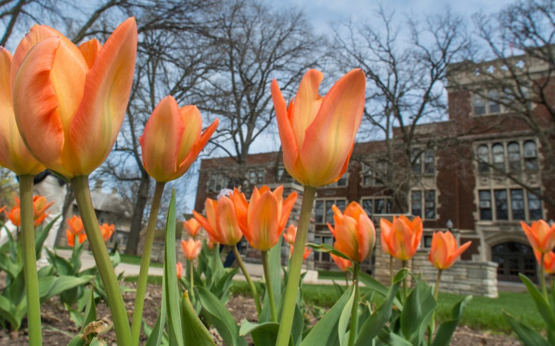UW Oshkosh Earth Week features planting, recycling, speakers and clean-up April 22-27