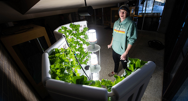 Food pantry to receive lettuce grown hydroponically at UW Oshkosh's Polk Library