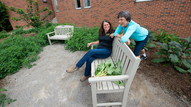 Benches, edible landscaping enhances vacant space at UWO