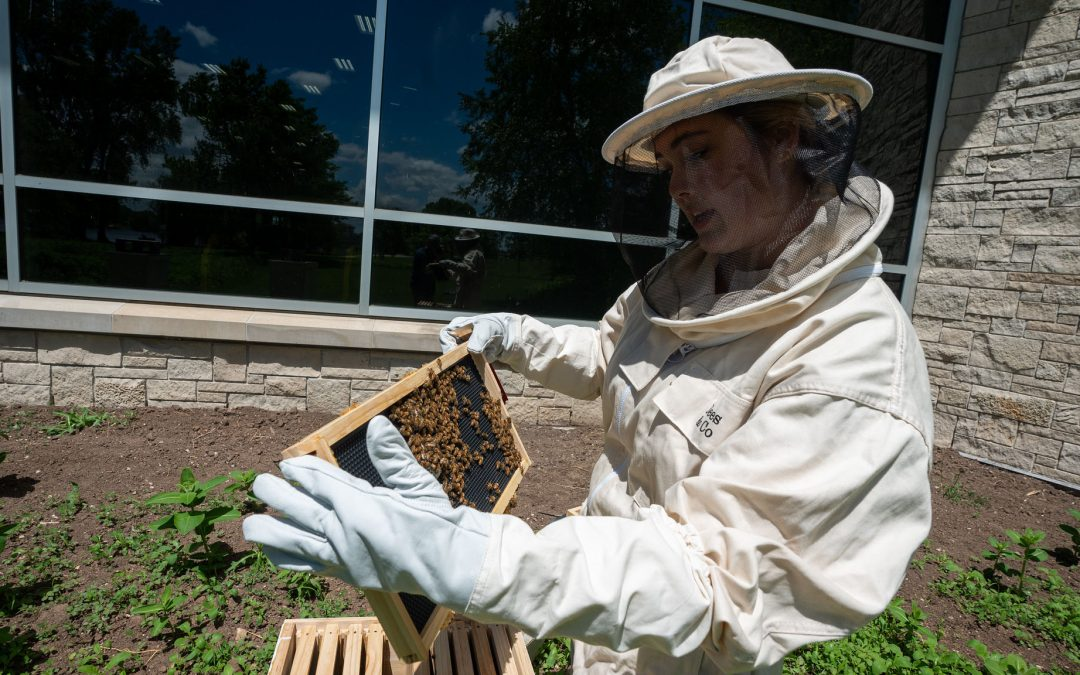 All the buzz: Honey bees taking residence at UW Oshkosh