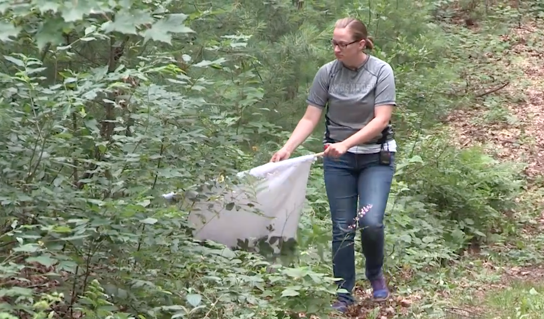 Research takes UWO grad student out of the lab and into the woods