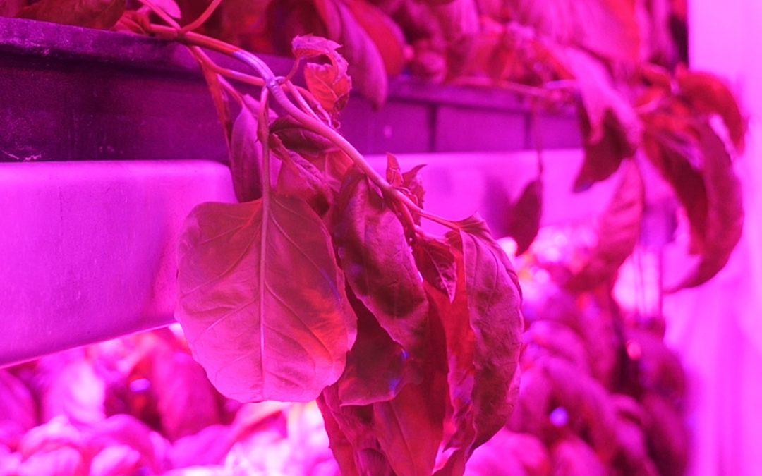 Alumnus goes organic with entrepreneurial hydroponic venture