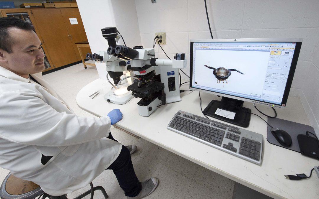 UWO biology grad student investigates beetle brain structure