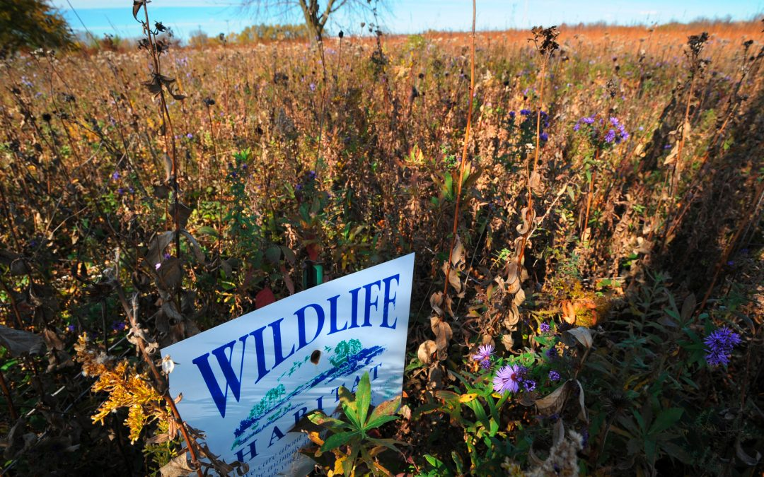 Climate Action in Wisconsin theme of UWO Earth Charter Community Summit Oct. 2-7